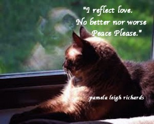 Cat reflection pamela quote 2