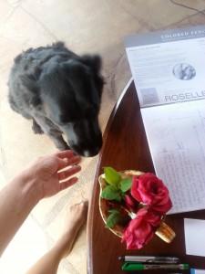 Pamela Dog Rose Art Love 2