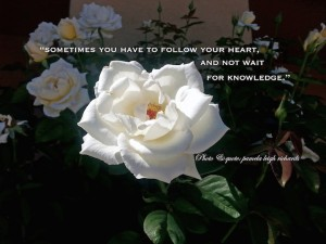 Pamelas White Rose Quote enhanced