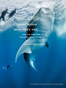 Whale Ocean divers pamela quote 2