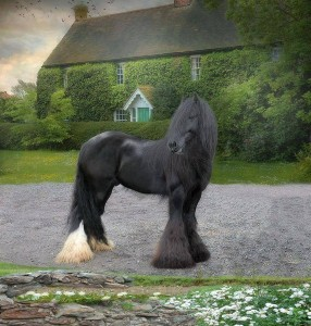 Fresian Horse in countryside