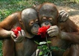 Monkeys Flowers 2