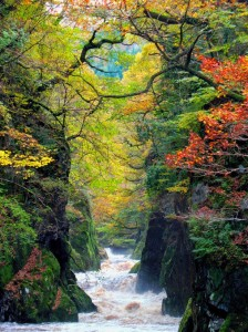 The Fairy Glen is a secluded and enchanting gorge on the river Conwy near to Betws-y-Coed in Wales. Photo by Brian McKay