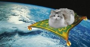 cat flying carpet