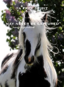horse black and white pamela quote 2