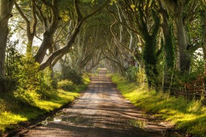 the-dark-hedges-tree-tunnel-16