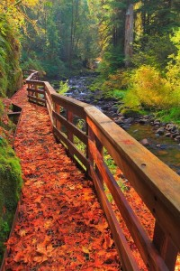 Beautiful river walk in Oregon