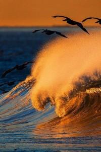 Seagulls in flight sunest