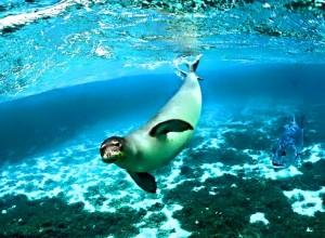 Seal fish Ocean beauty