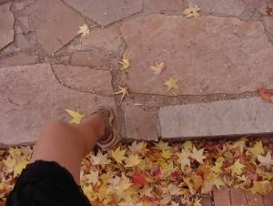 pamela foot maple leaves autum