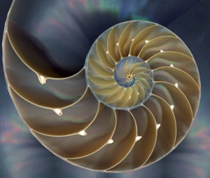 Sea Shell spiral perfect nature
