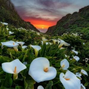 Sunset white flowers green mountain garden