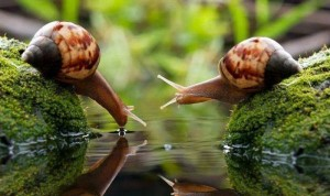 snail-drinking-water-1383778267_b