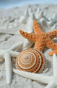 seashell-starfish-sand